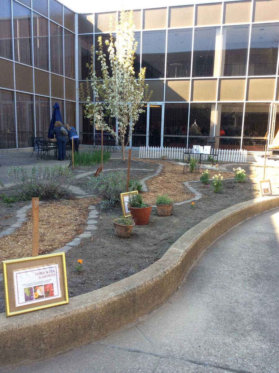 The herbs and tea garden located by Schrank Hall South