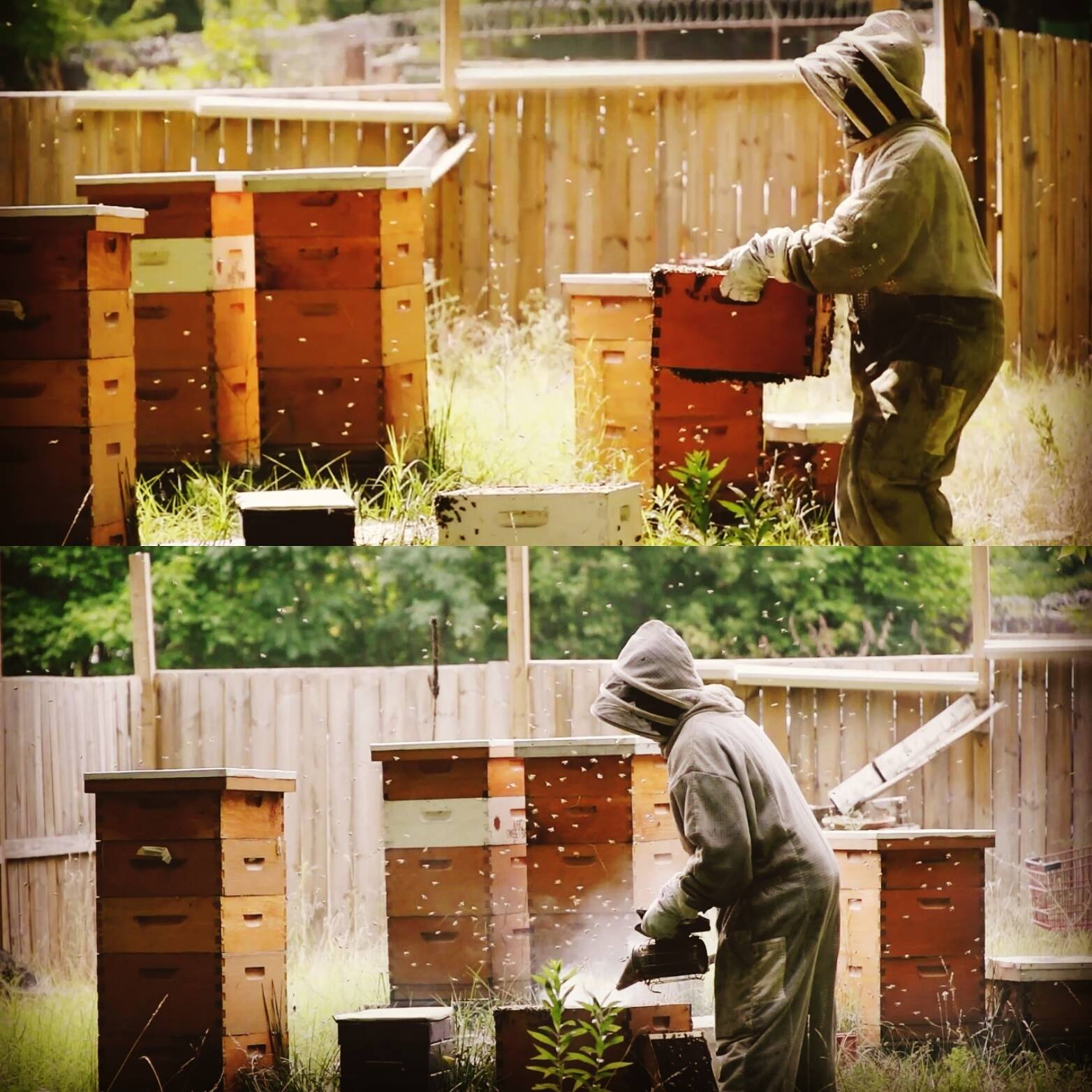 Brent Wesley, owner of Akron Honey Company, caring for his bees.