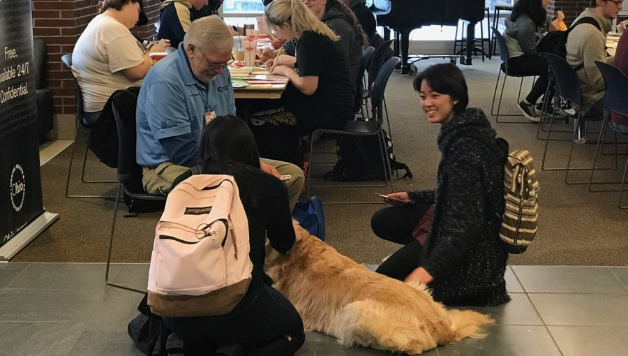 "During Taking Care Week 2018, students wrote ""Get Well"" cards for Akron Children's Hospital patients while relaxing with the therapy dogs."